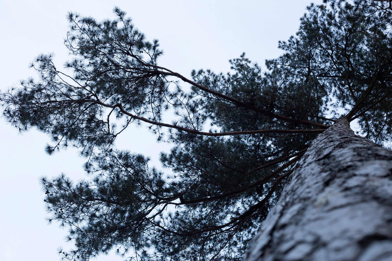 cours-yoga-paris-arbre